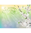 spring branch sun rays and glare vector image vector image