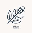 salvia sage flat line icon medicinal plant vector image vector image