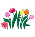 collection of flowers of the tulip vector image