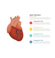 human heart infographics template with 4 points vector image