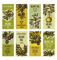 labels set for olive oil bottles design vector image