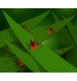 Mites in the tall green grass vector image vector image