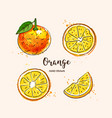 orange fruit drawing orange slices watercolor vector image vector image