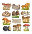 set of eatable mushrooms vector image