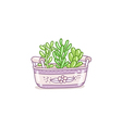Succulents in a pot vector image vector image