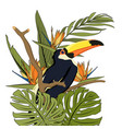 toucan black bird with yellow beak in natural vector image vector image