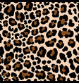 animal pattern leopard seamless background with vector image vector image