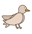 drawing dove wedding icon vector image