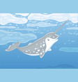 arctic narwhal vector image