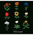 Asteraceae Flowers Set vector image vector image