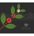 Coffee tree branch vector image vector image
