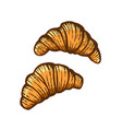 hand drawn of croissants vector image vector image