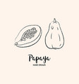 papaya fruit drawing papaya pawpaw slice and vector image vector image