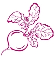 radish with leaves pictogram vector image