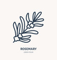 rosemary flat line icon medicinal plant leaves vector image