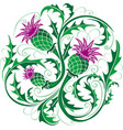 stylized image of a thistle vector image vector image
