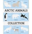 Arctic animals collection vector image vector image