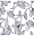 flowering magnolia hand drawn black and white vector image