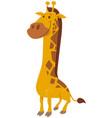 funny giraffe animal character cartoon vector image