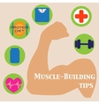 muscle-building set vector image