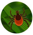Mite in the tall green grass vector image