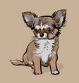 little chihuahua dog puppy vector image