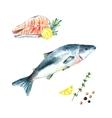 Watercolor salmon vector image vector image