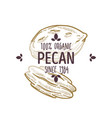 100 percent organic pecan nut shelled and cracked vector image