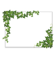 white sheet entwined with ivy vector image vector image