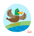 wild bird duck in cartoon style isolated on white vector image vector image