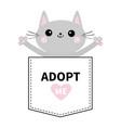 adopt me gray cat hug in pocket pink heart vector image vector image