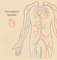 human circulatory