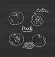 peach fruit drawing peach fruit cut in half vector image vector image