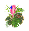 tillandsia cyanea on a branch bouquet vector image