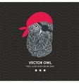 Cute little pirate owl vector image