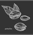 delicious pistachio in shell with couple of leaves vector image