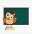 Cute owl with books on a blackboard