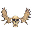 hand drawn skull with deer horns on background vector image