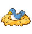 blue bird in nest on white background vector image vector image