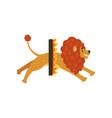 cute circus lion cartoon character jumping through vector image
