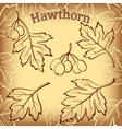 Hawthorn Leaves and Fruits Pictograms vector image vector image