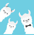 llama alpaca family head face set mother father vector image