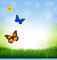 spring landscape with butterfly vector image