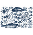 hand drawn seafood set vector image