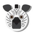Isolated zebra face