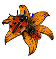 ladybird set three ladybirds vector image vector image