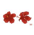 isolated tropical flowers hibiscus image vector image