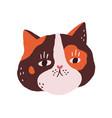 cute cat s face fluffy head of feline animal vector image vector image
