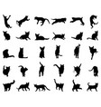 big set cats silhouettes vector image