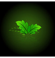 green leaves eps10 vector image vector image